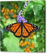 Orange Splendour Canvas Print