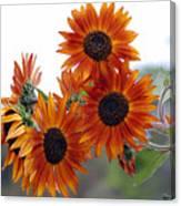 Orange Sunflower 1 Canvas Print