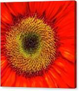 Orange Sunflower Canvas Print