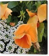 Orange Teardrop With White Lace Canvas Print