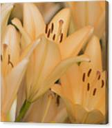 Orange Tiger Lillies Canvas Print
