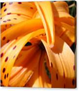 Orange Tiger Lily Flower Art Prints Giclee Baslee Troutman Canvas Print