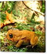 Orange Toad Canvas Print