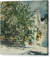 Orange Trees And Gate Canvas Print