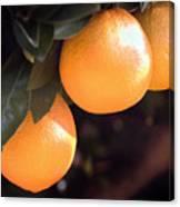 Orange Trio Canvas Print