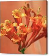 Orange Trumpet Honeysuckle Canvas Print