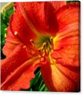 Orange Trumpeting Lily Canvas Print