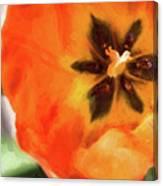 Orange Tulip Bloom Canvas Print
