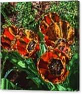 Orange Tulip Chrome Canvas Print