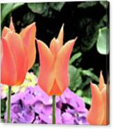 Orange Tulip Painting  Canvas Print