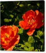 Orange Tulips In My Garden Canvas Print