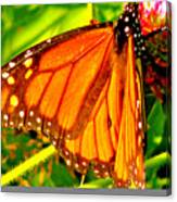 Orange Winged Butterfly Canvas Print