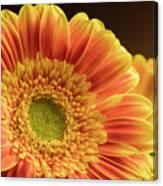 Orange Yellow Gerbera Canvas Print