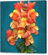 Orange Yellow Snapdragon Flowers Canvas Print