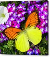 Orange Yellow Wings Canvas Print