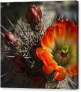 Orange You A Hedgehog  Canvas Print