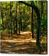 Orangedale Path Canvas Print