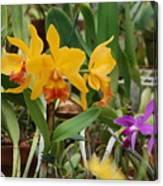 Orangepurple Orchids Canvas Print