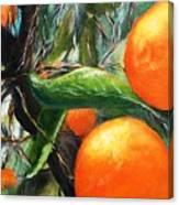 Oranges Extract Canvas Print