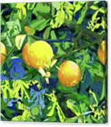 Oranges On Vine IIi Canvas Print