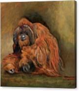Orangutan Monkey Canvas Print