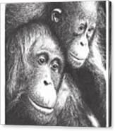 Orangutans Canvas Print