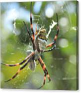 Orb Weaver Spider And Prey In A Web Canvas Print