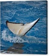 Orca 1 Canvas Print