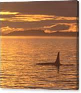 Orca Killer Whale Canvas Print