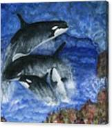 Orcas Family Frolicks Canvas Print