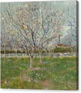Orchard In Blossom Plum Trees Canvas Print