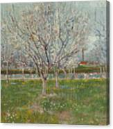 Orchard In Blossom, Plum Trees Canvas Print