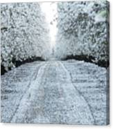 Orchard In White Canvas Print