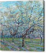 Orchard With Blossoming Plum Trees   Canvas Print