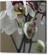 Orchid - 100 Canvas Print
