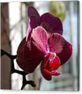 Orchid - 102 Canvas Print