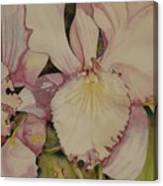 Orchid - Closeup Canvas Print
