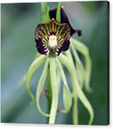Orchid 10 Canvas Print