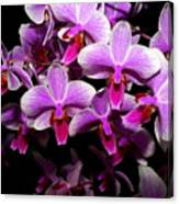 Orchid 12 Canvas Print