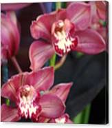 Orchid 14 Canvas Print