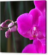 Orchid 18 Canvas Print