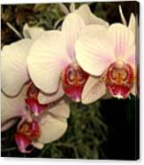 Orchid 19 Canvas Print
