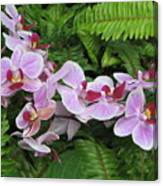 Orchid 2 Canvas Print