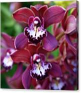Orchid 20 Canvas Print