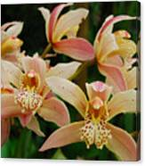 Orchid 255 Canvas Print