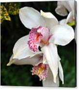 Orchid 29 Canvas Print