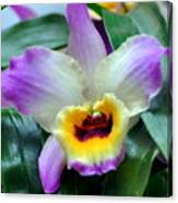 Orchid 34 Canvas Print