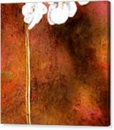 Orchid 4 Canvas Print