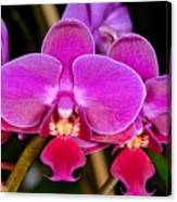 Orchid 422 Canvas Print