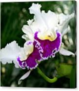 Orchid 6 Canvas Print
